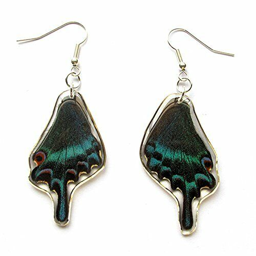 Genuine Alpine Black Swallowtail Butterfly Wing Earrings