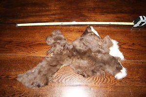 rare baby alpaca fur pelt hide skin taxidermy tanned furs pelts