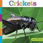 Crickets by Laura K Murray (Paperback / softback, 2016)