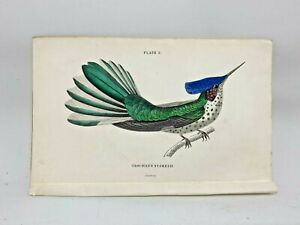 1st-Ed-Hand-colored-Jardine-039-s-Natural-History-1834-Stoke-039-s-Hummingbird-5