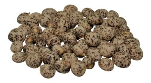 2,20 EUR Kg TIGERLUPINE 10,0Kg Süßlupinen Lupinen