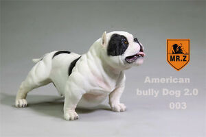 "Mr.Z Animal Simulation 1//6 American Bully Dog 2.0 Pitbull For 12/"" Figure 003 Toy"
