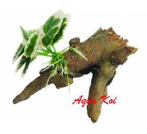 Tb087 aquarium fish tank planted tree root stump ornament for Aquarium tree root decoration