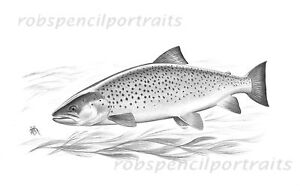 Sea trout fly fishing drawing game art drawing print gift - Dessin truite ...
