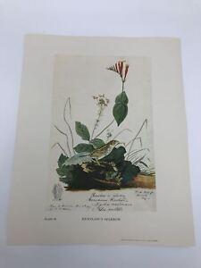John-James-Audubon-Folio-Plate-89-Henslow-039-s-Sparrow-Limited-750