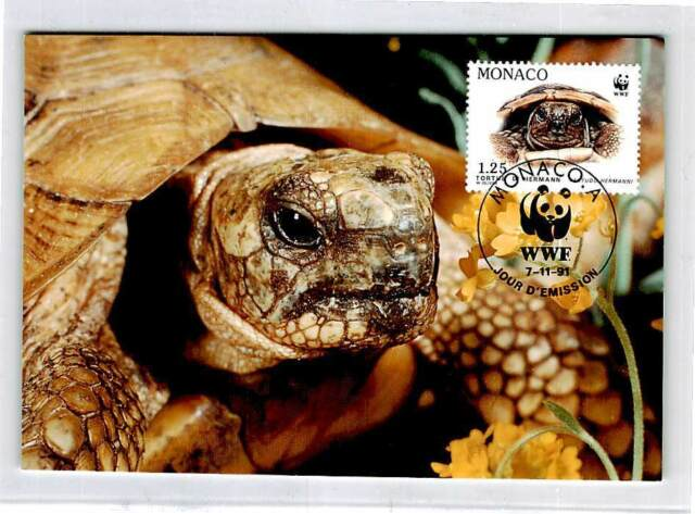 MONACO MK SCHILDKRÖTE TURTLE TORTUES TORTOISE CARTE MAXIMUM CARD MC CM d9961