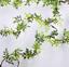 thumbnail 17 - 4Pcs-Artificial-Flowers-Silk-Wisteria-Garland-Ivy-Vine-Hanging-Home-Decor