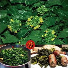 50 semi broccoli cime di rapa friarielli napoletani + OMAGGIO 5 semi GIRASOLE