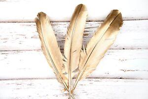 "sombrerería Manualidades Oro muy grandes plumas de Turquía 10-12/"" bodas decoración del hogar"
