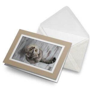 Greetings-Card-Biege-Beautiful-Grey-Tabby-Cat-Kitten-16890