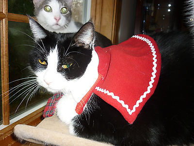 Donate in Gabe's Memory--Cancer Warrior--Proceeds Help Local Cats Receive Chemo