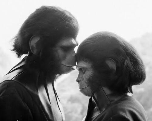 Planet of the Apes Zira and Cornelius Vintage Exclusive 8 x 10 Photo 511