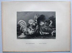 Gefluegel-Huehner-Hahn-Der-Hahnenkampf-Stahlstich-von-W-French-um-1870