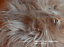 Sheepskin-rustic-stool-tabouret-hocker-sheepskin-Long-Wool-12-20cm-25-color thumbnail 15