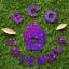 Hemway-Eco-Friendly-Glitter-Biodegradable-Cosmetic-Safe-amp-Craft-1-24-034-100g thumbnail 231