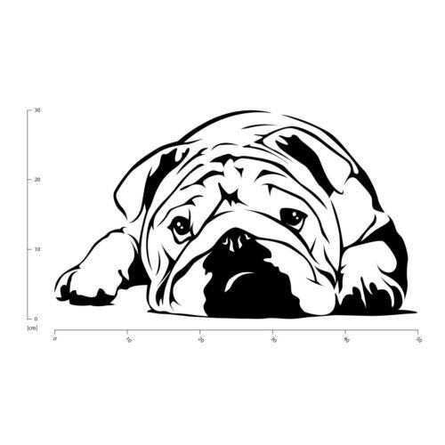 Englische Bulldogge Haustiere Hunde Wandtattoo WS-19172
