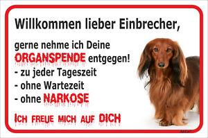 Dackel Langhaar Rot Kraftvoll Schild Vorsicht Einbrecher 15x20-40x60cm Hund Teckel