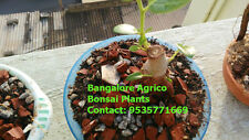 BONSAI MIX - ORGANIC MIX FOR BONSAI PLANTS - PURE - LONG LIFE - 5 KG