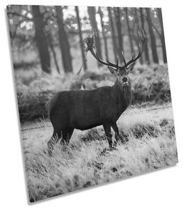 Wild-Stag-Deer-Forest-B-amp-W-CANVAS-WALL-ART-SQUARE-Picture-Print