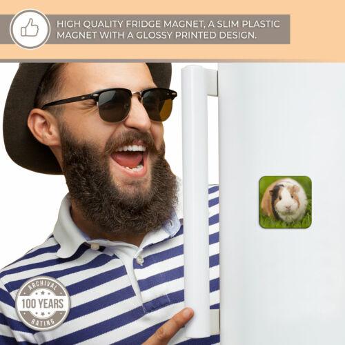 Super Aimant de réfrigérateur-tri couleur Guinea Pig PET rongeur Cool Cadeau #15969