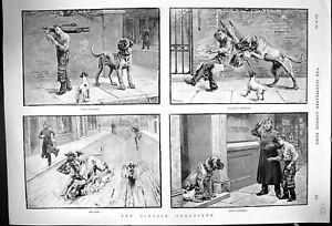 Old-Antique-Print-1889-Street-Scene-Dogs-Animals-Highway-Robbery-Butcher-19th
