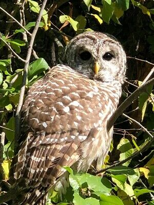 owlsnestkid