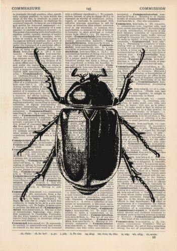 Käfer Wörterbuch Illustration Kunstdruck Weinlese-Zoo Insekt Entomologie