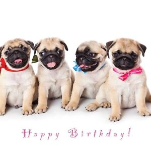 Image Is Loading Birthday Card Dogs Amp Puppy Designs Ideal For