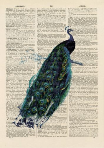 Vintage Peacock Print Wall Art Antique Dictionary Antique Book page Art Print