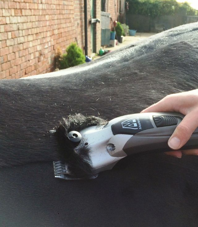 Horse Clippers Masterclip V-Series Variable Speed Clipper Clipper Clipper  2 Year UK Warranty   aea5eb