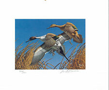 MINNESOTA #3 1979 STATE DUCK STAMP PRINT PINTAILS by David Maass List $400