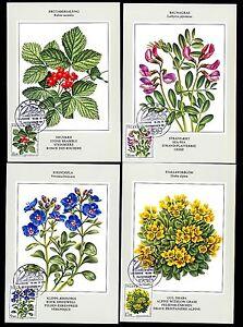 Island-628-31-Maximumkarten-Blumen-u-a-Felsenbluemchen