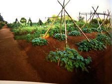 25 VEGETABLE Emergency Survival Seed Garden Heirloom NON-GMO NON-HYBRID SEED KIT