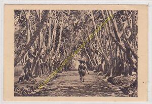 SEPIA-AFRIQUE-CONGO-Allee-de-Ficus-Edit-BeGUE