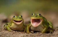 FROG CHORUS NATURAL SOUNDS CD, FROGS CROAKING RELAXATION, MEDITATION, NATURE