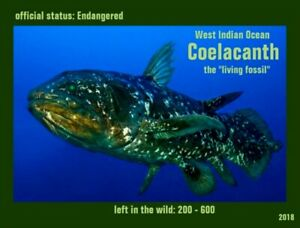 The Coelacanth an Endangered Species card by PostcardsTo SaveThePlanet.org