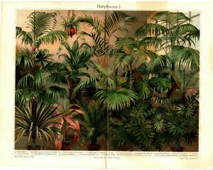 Alter historischer Druck Seeanemonen Chromolithographie 1907