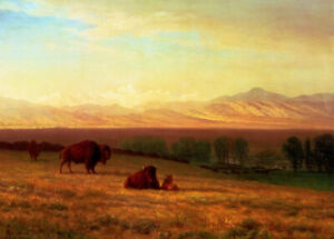 Albert-Bierstadt-Buffalo-On-The-Plains-Fine-Art-Print-on-Canvas-Reproduction-SM