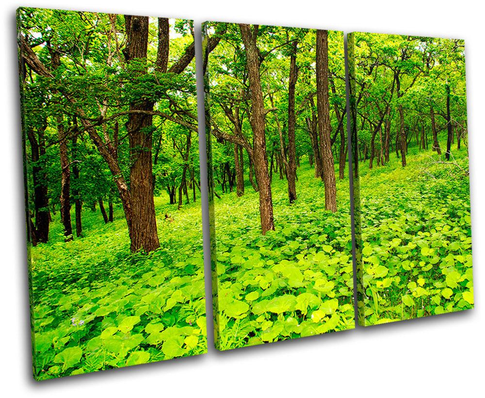 Forest Scene Landscapes TREBLE TREBLE TREBLE TELA parete arte foto stampa d5e43f