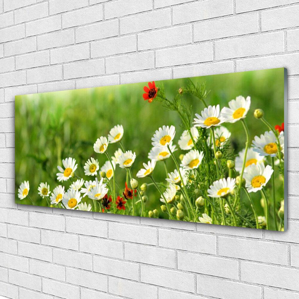 VETRO Stampa Wall Art 125x50 immagine foto Daisy Natura