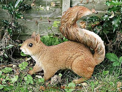 LIFE SIZE RED SQUIRREL, STUNNING HOME & GARDEN ORNAMENT. ULTRA REALISTIC