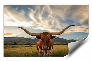 Longhorn Cattle Stare Down Grazing Pasture Hd Vinyl Poster