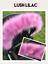 Hood-fur-trim-pram-fur-Fur-for-baby-pram-Bugaboo-My-Babiie-Icandy-Egg thumbnail 18