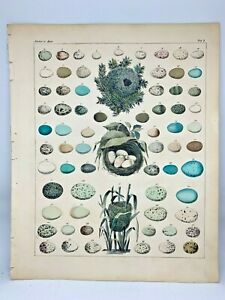 Antique-large-hand-colored-print-1843-Oken-039-s-Naturgeschichte-Plate-1-Nests-Eggs