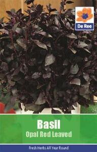 Herbe Basilique Graines Opale Rouge Feuillu Jardin Wnffqn0z-10115531-787706065