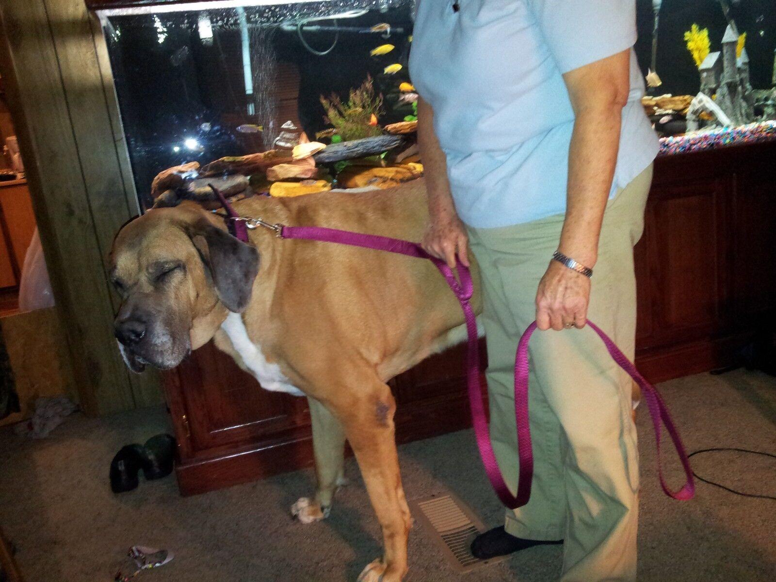 Great Pyrenees Metal Hardware XX Adjustable Dog Harness Mastiff Saint Bernard