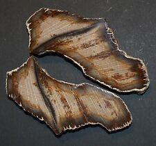 2 PETRIFIED WOOD POLISHED SLICES  from Bulgaria