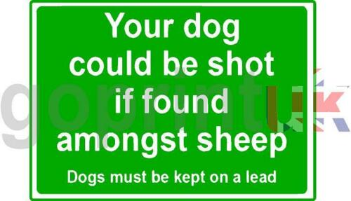 YOUR DOG COULD BE SHOT IF FOUND AMONGST SHEEP PRINTED SIGN A4