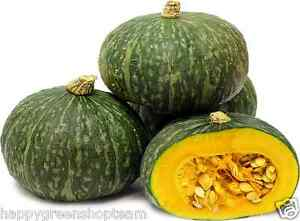 VEGETABLE-KABOCHA-JAPANESE-SQUASH-15-SEEDS-PUMPKIN-delicious-vegetable