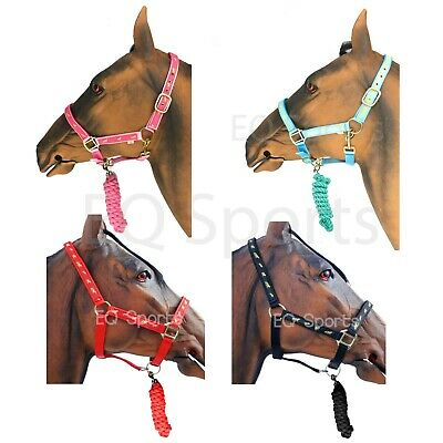 Full, Baby Blue Knight Rider Nylon Padded Headcollar With Pattern /& Lead Rope